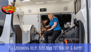 Pet Grooming Helps Keep Your Pet Healthy & Happy