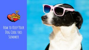 How to Keep Your Dog Cool this Summer